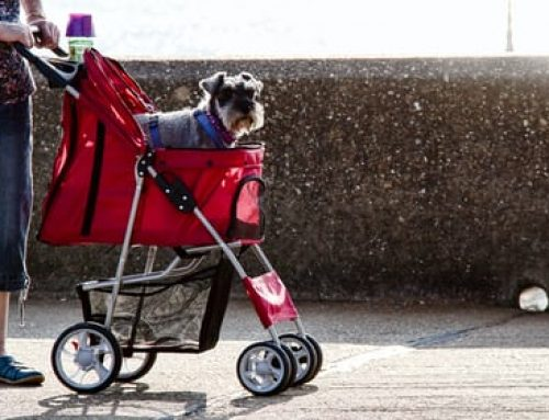 What do you need to know before buying a pram ?